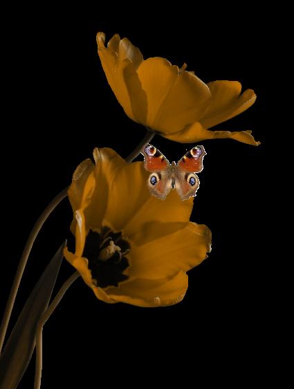 Mes tubes fleurs !!