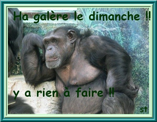 Gorille et petit singe - Petit singe rigolo ...