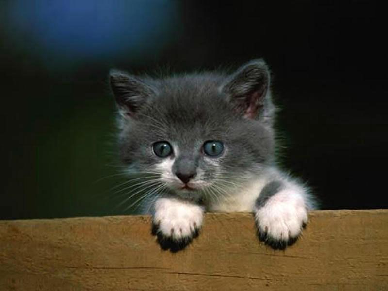 Des petits chats page 4 - Image de petit chat ...