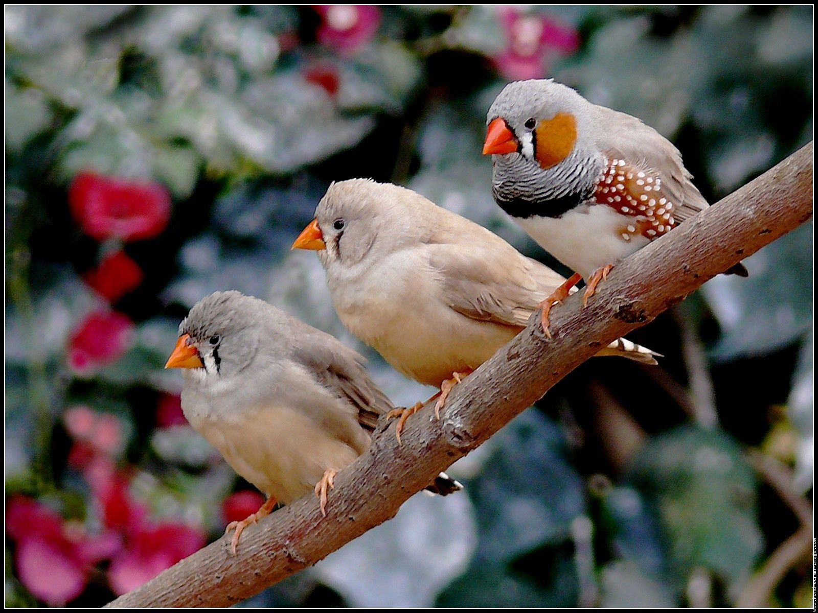 magnifiques oiseaux !!