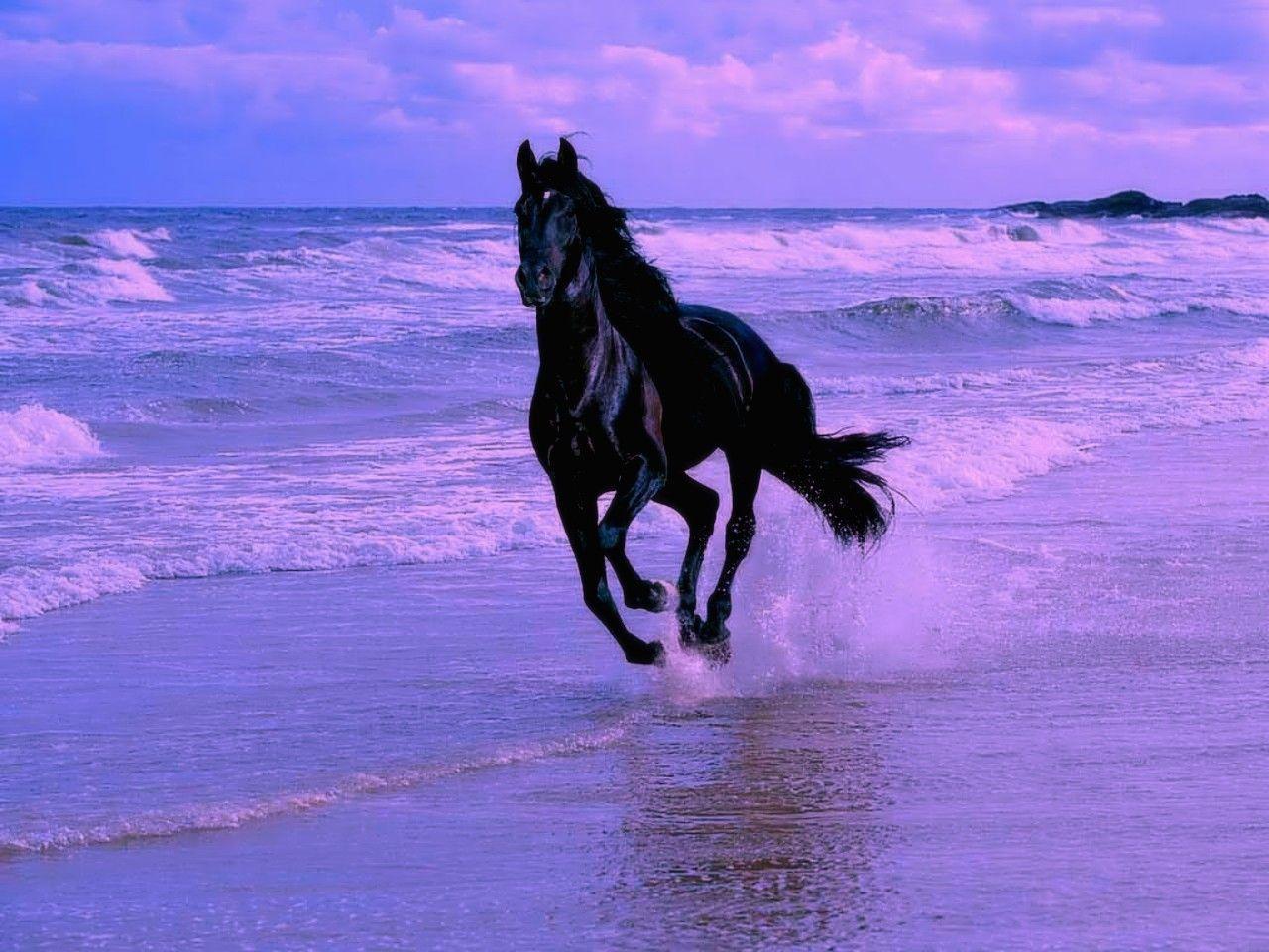 Les chevaux page 2 - Chevaux gratuits ...